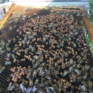 ruche bourdonneuse