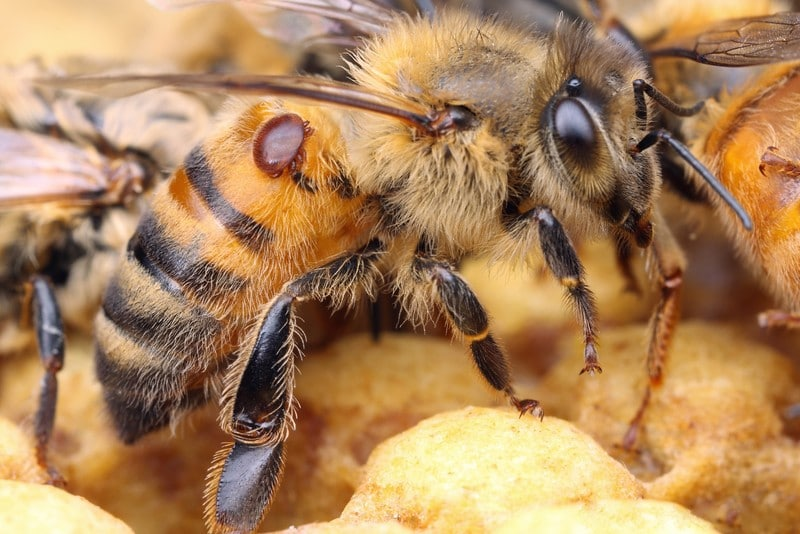 Comment éliminer le varroa