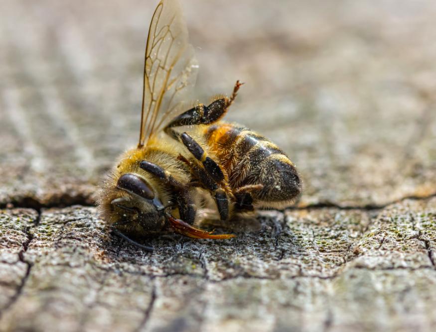 3 raisons qui causent la mort de vos ruches l'hiver