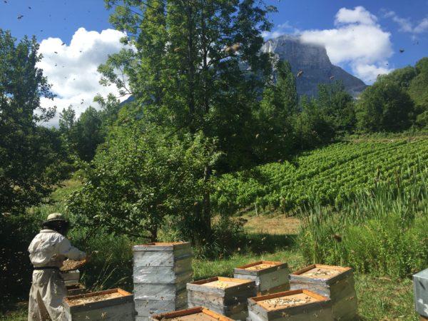 apprendre l'apiculture, récolte de miel