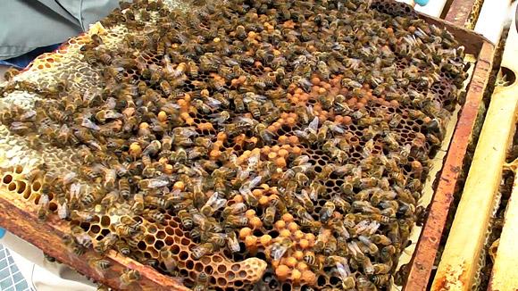 Peut-on sauver une ruche bourdonneuse